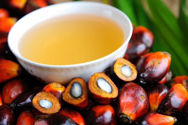 ciotola-olio-palma