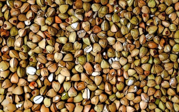grano saraceno 600x375